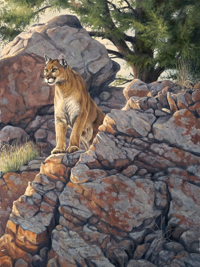 Cougar Puma Mountain lion painting by Cliff Rossberg