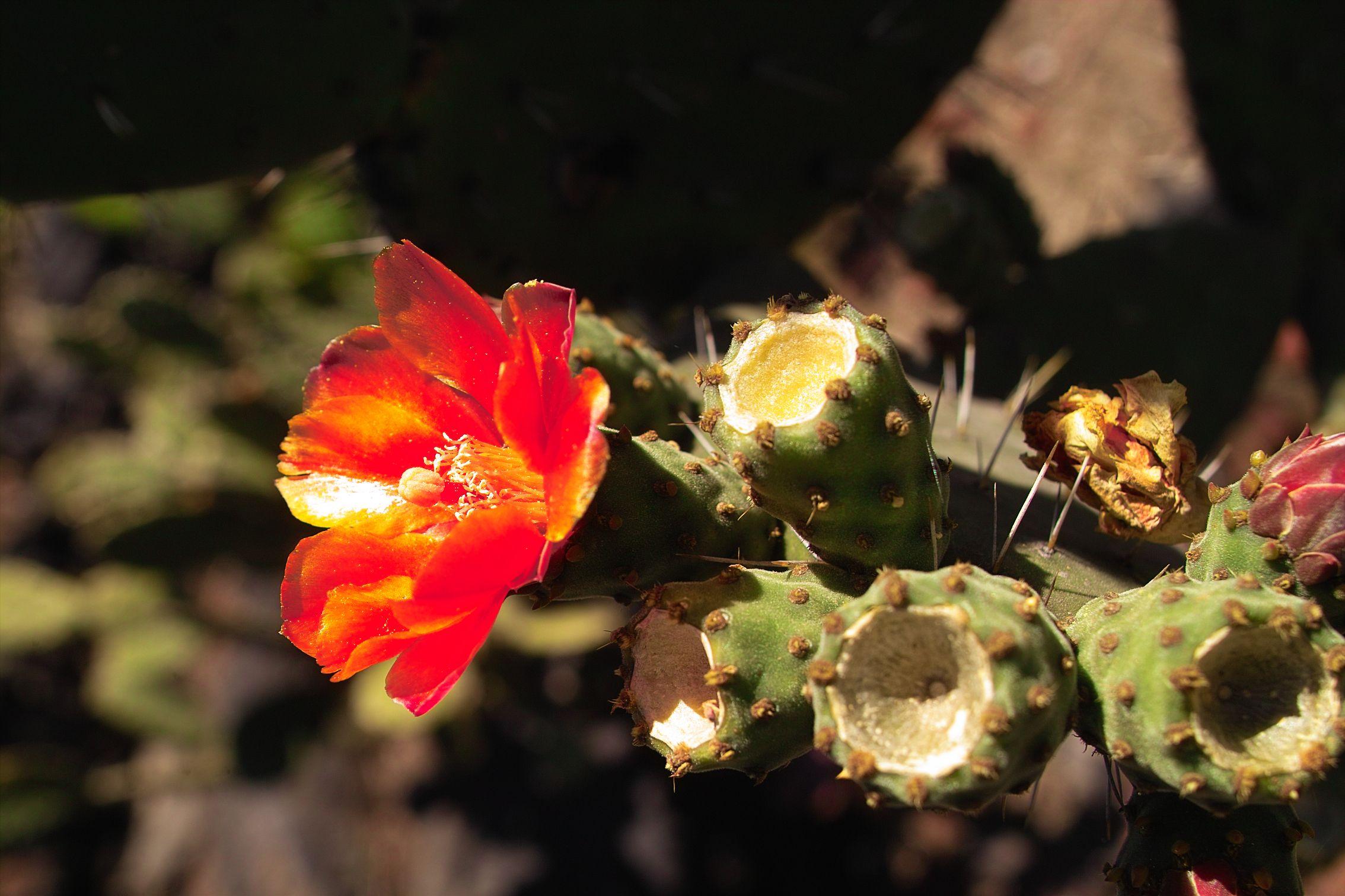 Para ecologistas y runners: el Jardín Botánico de CU. En este lugar a uno lo acompaña el canto de las aves. Se siente esa brisita fresca en el rostro que invita a seguir. Ustedes que corren saben bien de qué hablo. http://cronicasdeasfalto.com/para-ecologistas-y-runners-el-jardin-botanico-de-cu/