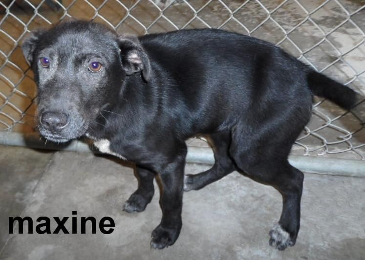 Adopt Maxine On With Images Homeless Pets I Love Dogs Animals