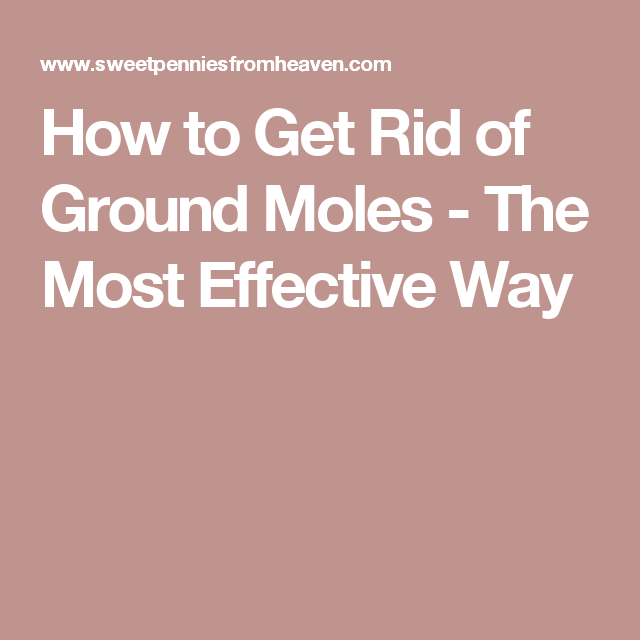 How to Get Rid of Ground Moles - The Most Effective Way ...