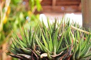 Janiopolis orquideas (17)