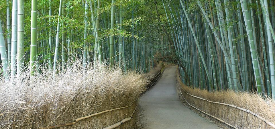 Arashiyama Bamboo Grove Kyoto Japan 嵐山竹林