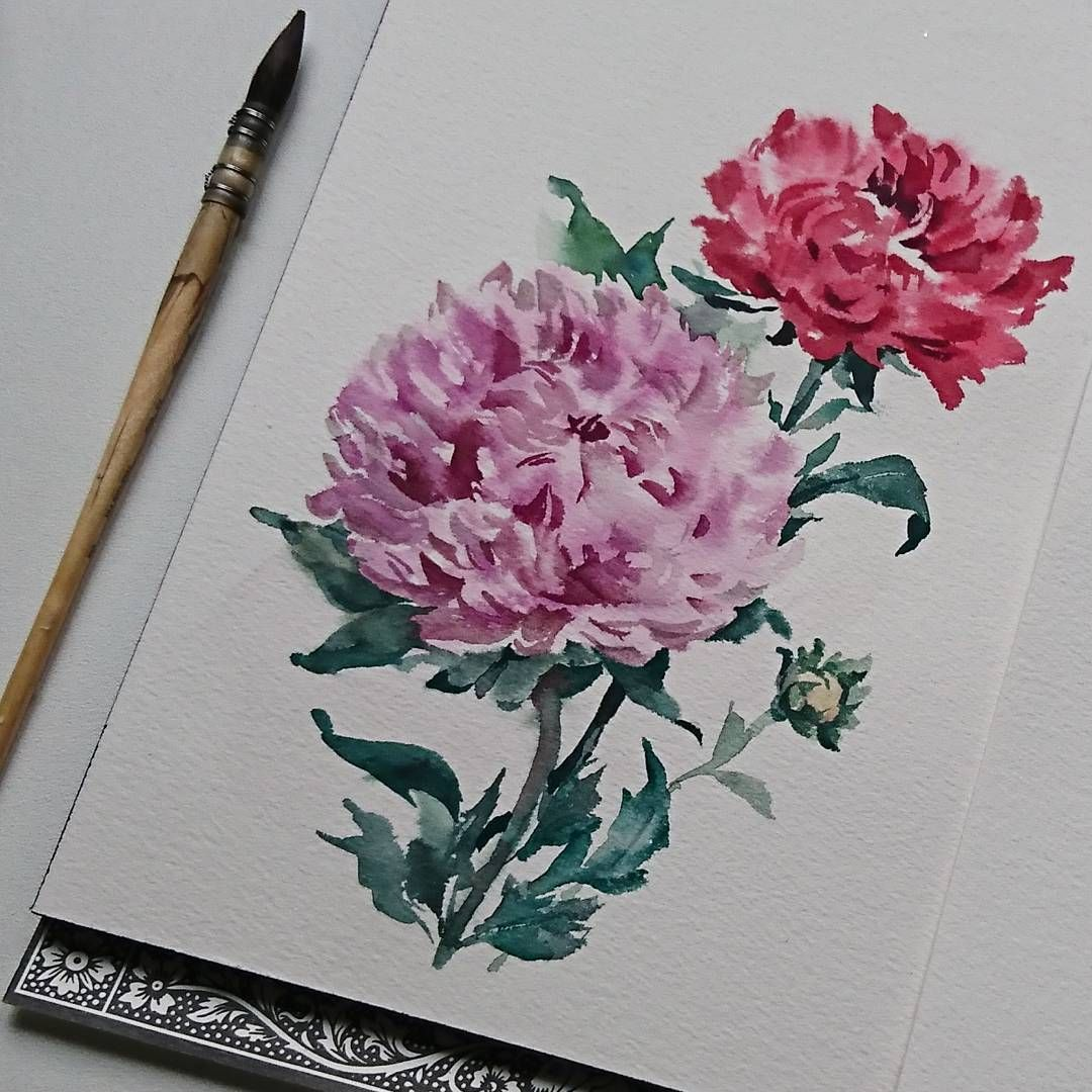 Can you tell its chrysanthemum watercolor flowers chrysanthemum watercolor flowers chrysanthemum paint painting izmirmasajfo