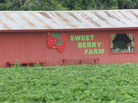 Sweet Berry Farm, Marble Falls in 2020 | Marble falls ...