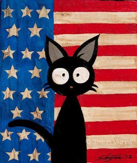 An American kitty