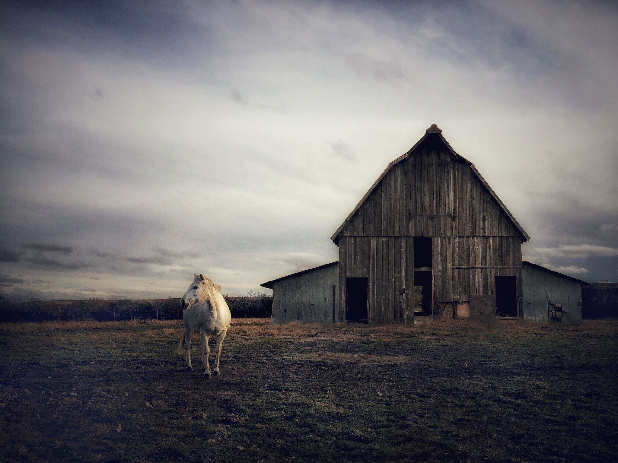 https://flic.kr/p/KLnsco | White Horse, Old Barn | Butler County, Kansas.
