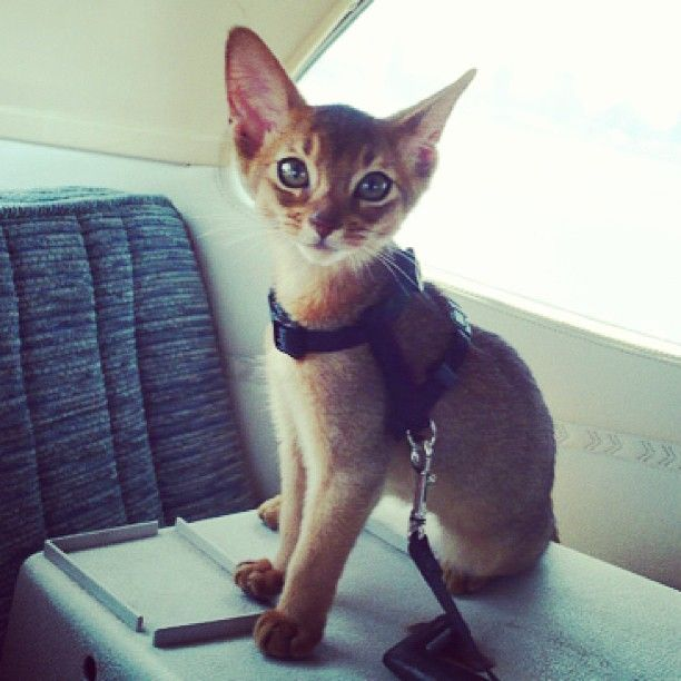 Today is her 4th birthday. She used to be so little! #hazelcat Web Instagram User » Followgram