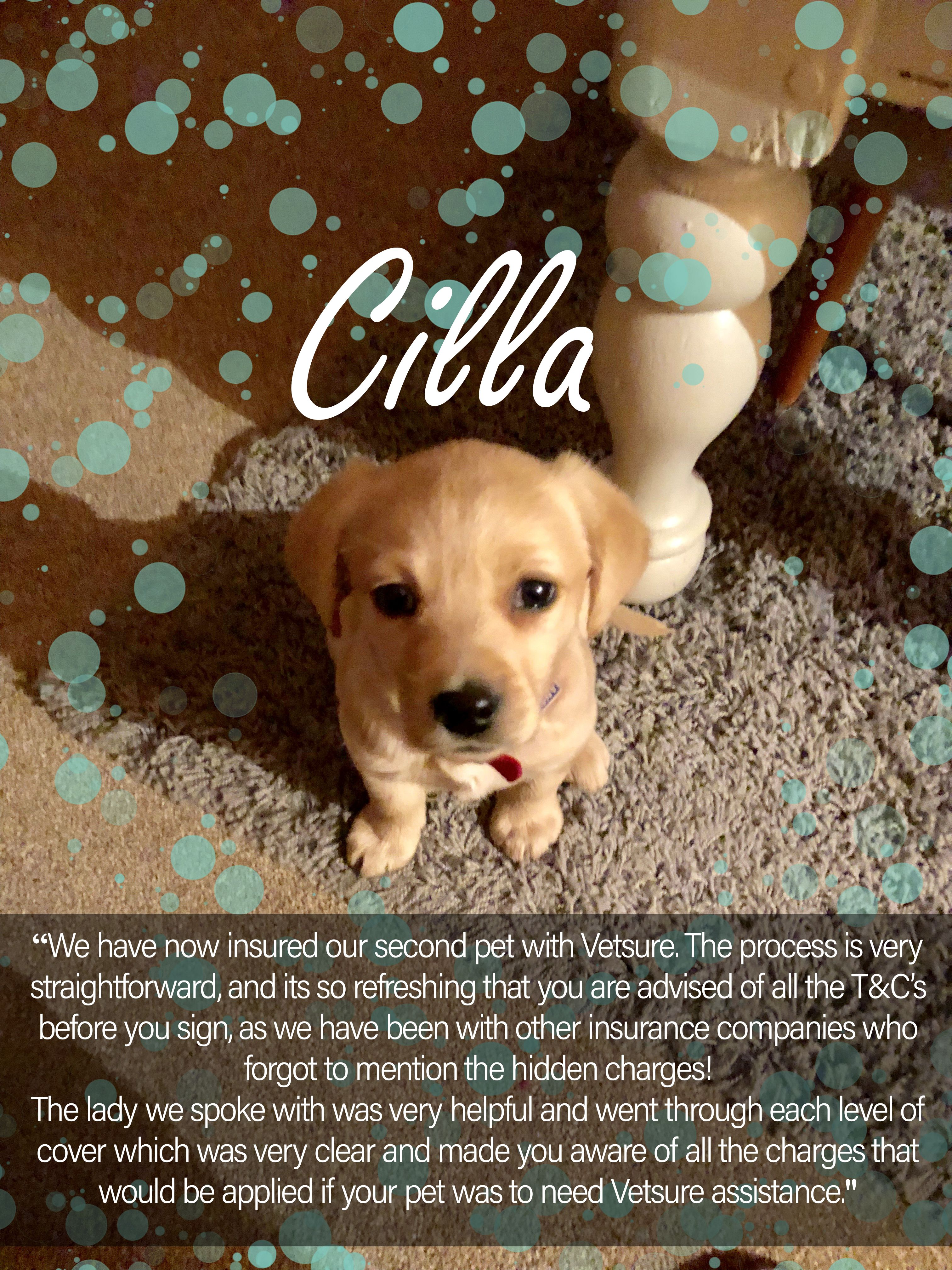Cilla Dog Review With Images Dog Insurance Cat Insurance Dogs