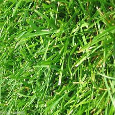 Bermuda Grass Seeds Common Unhulled 10 Lbs Bulk Bag Premium Grade