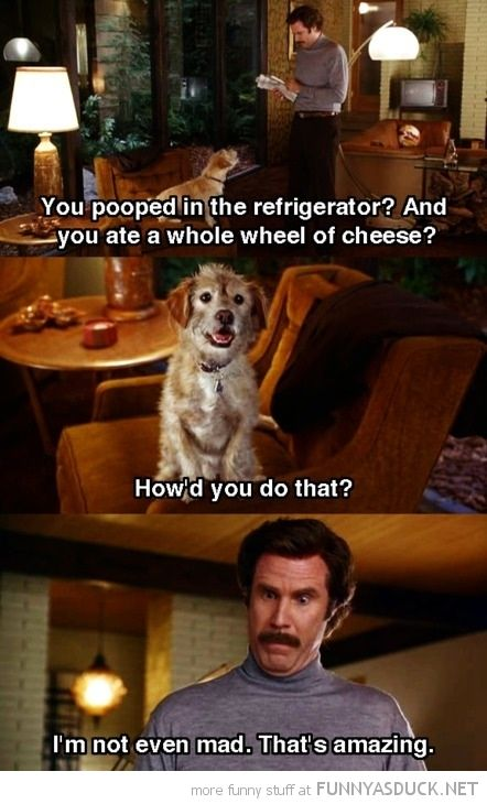 Anchorman 2 Quotes The Dog Anchorman Quotes Anchorman Quotes