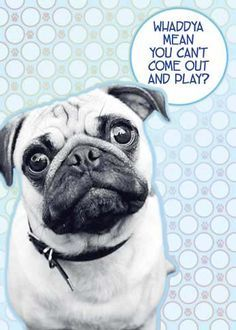 Pug Get Well Cards Google Search Get Well Cards Get Well Dogs