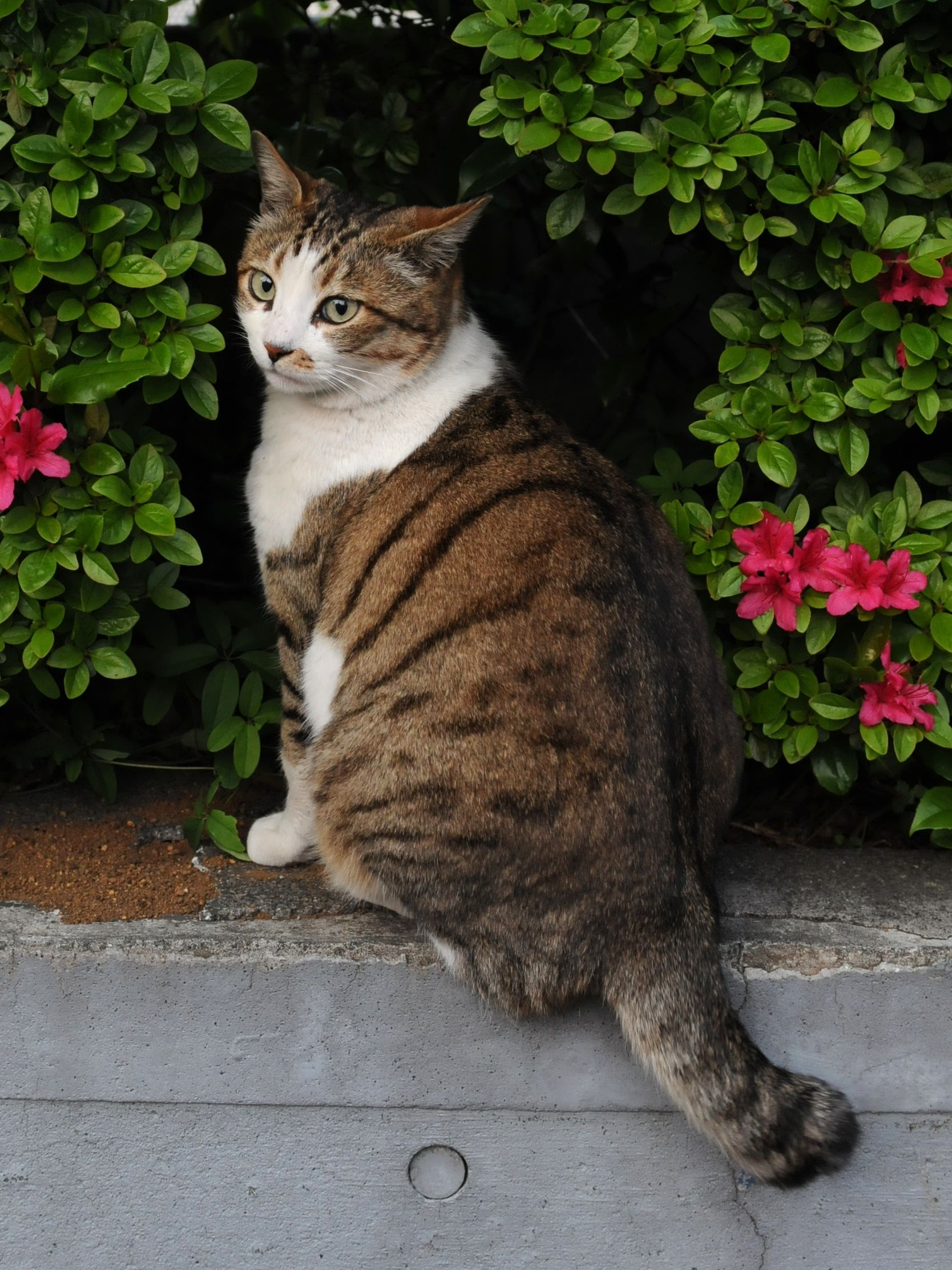 LOVE the Black and White Tabby (With images) Tabby cat