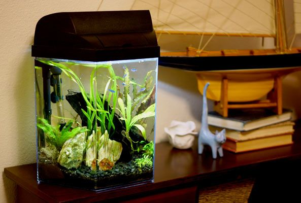 Stocking A 3 To 5 Gallon Aquarium Wistful Blue 5 Gallon Aquarium Aquarium Small Fish Tanks
