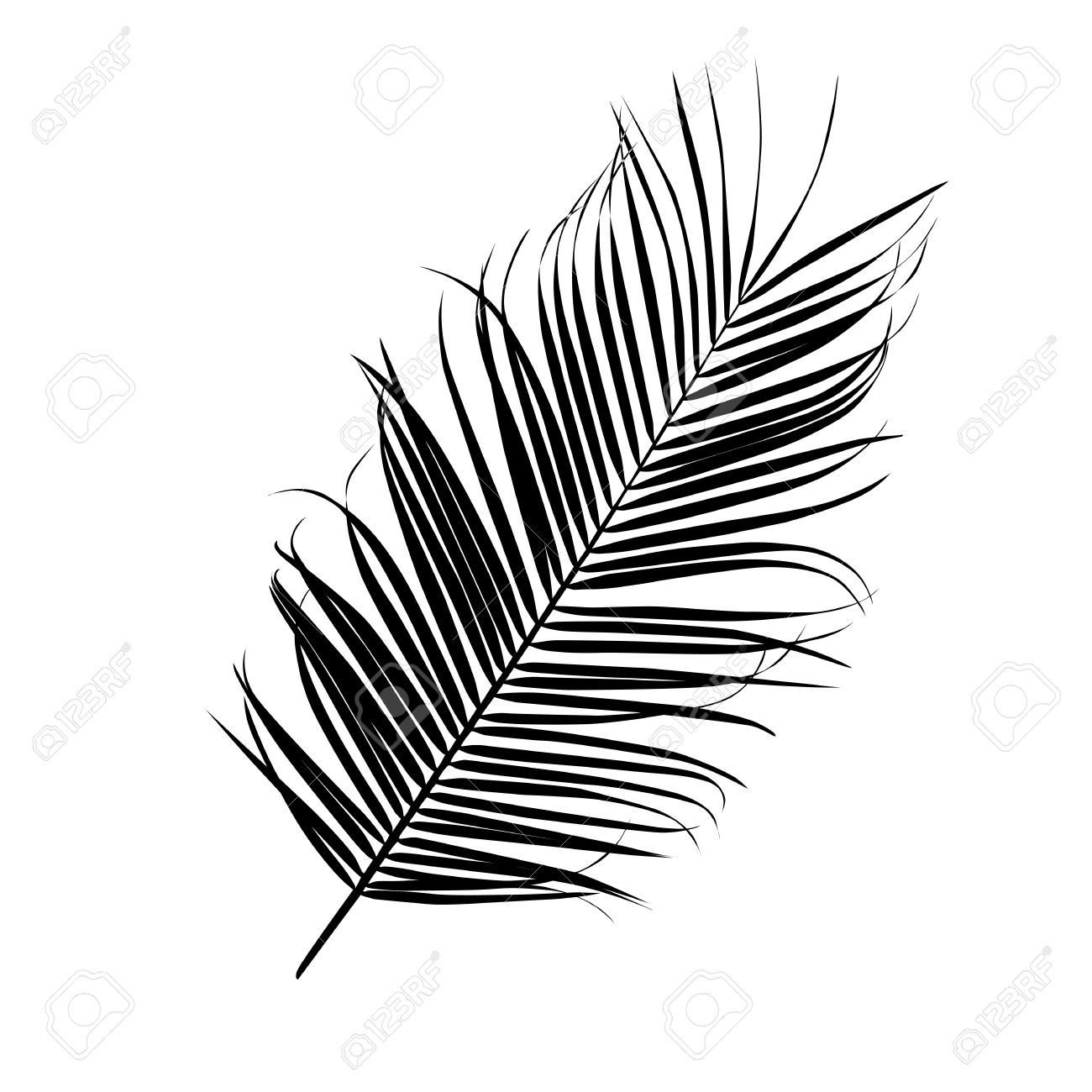 Silhouette d 39 une feuille de palmier isol sur blanc clip art libres de droits vecteurs et - Dessin d une feuille ...
