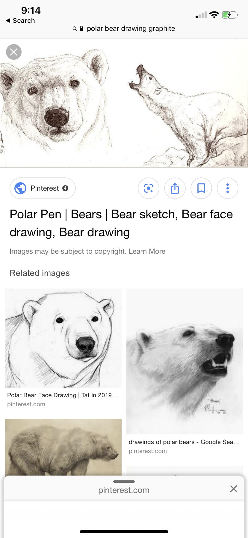 Pin by Grace Holley on School Bear face drawing, Polar