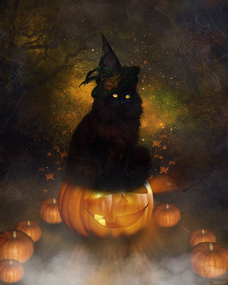 Halloween Art Halloween Cat By Tinca2 On Deviantart Black Cat