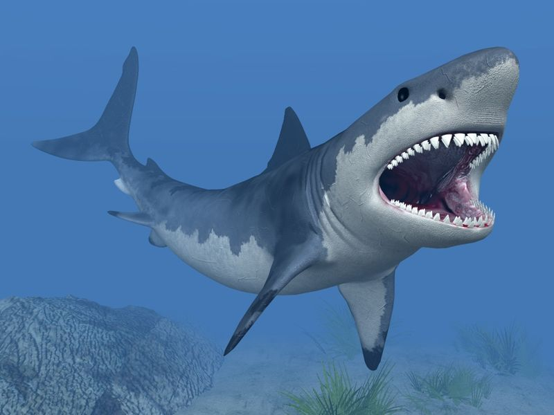 23 Kumpulan Berbagai Gambar Ikan Hiu   Worldofghibli.id