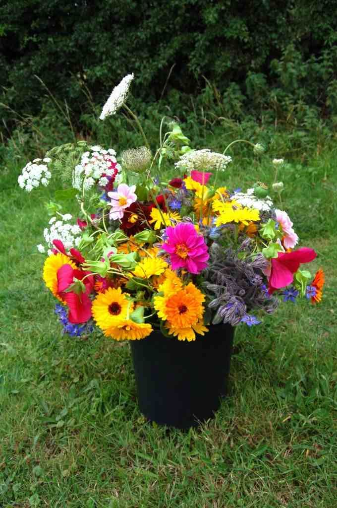 Top 50 Cut Flowers Garden Cut Flower Garden Perennials Flowers