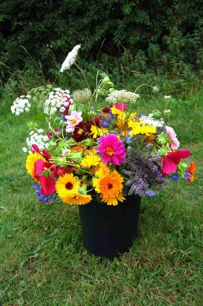 Best Cut Perennial Flowers Cutting Garden Top 50 Cut 400 x 300