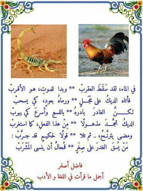 من يسقي الغدر على صغر فمحال أن ينسي المشرب Book Qoutes Islamic Phrases Arabic Quotes