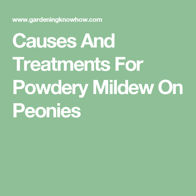 Causes And Treatments For Powdery Mildew On Peonies Treatment Peony Leaves Avocado