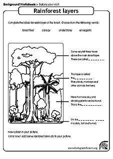 Rainforest Worksheet For Kids Layers Of The Rainforest Worksheet