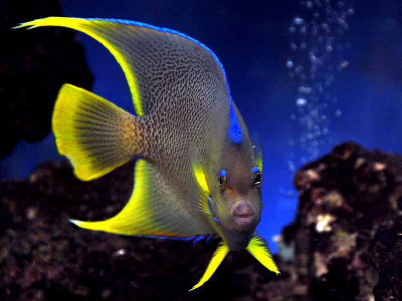 What To Look While Purchasing Affordable Saltwater Aquarium Fish Online Saltwater Aquarium Fish Saltwater Aquarium Aquarium Fish