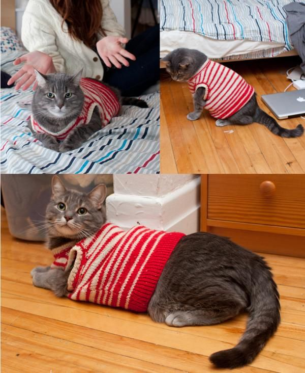 {sweater kitty} is there anything cuter?!