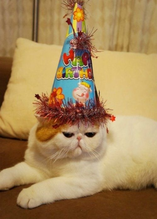 Birthday Hats Have Never Looked So Good