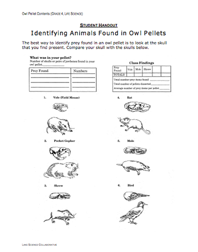 Here 39 S A Packet Of Materials For An Elementary Lesson On