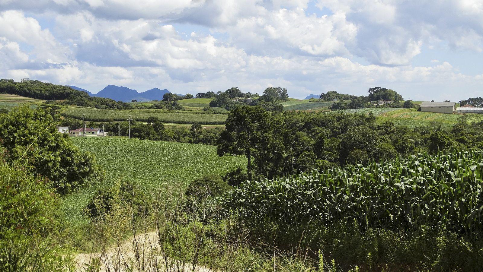 https://flic.kr/p/jQM3U8 | Meu Paraná: Paisagem Rural em São José dos Pinhais | Bonita e típica paisagem rural da região sul do Paraná. Essa área se situa na Colônia Murici, no município de São José dos Pinhais, região Metropolitana de Curitiba.