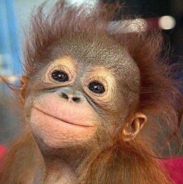 Monkey Baby   Cute animals, Happy animals, Smiling animals