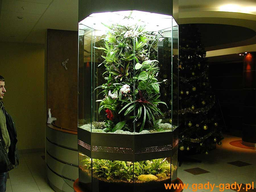 And I'm going to try a vivarium this time (tank with living plants)