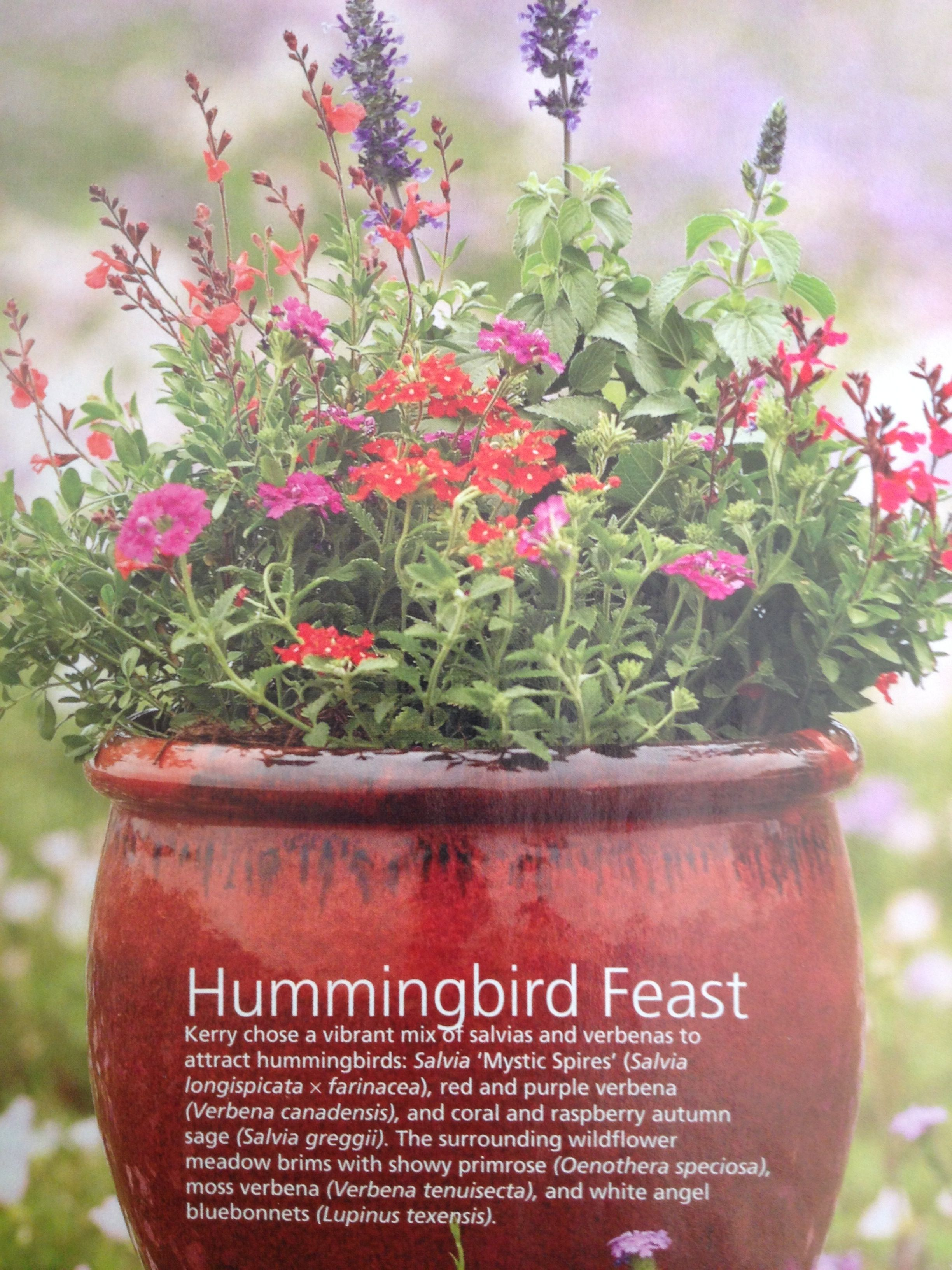 Country Gardens Yes You Can Have A Hummingbird Garden In Containter