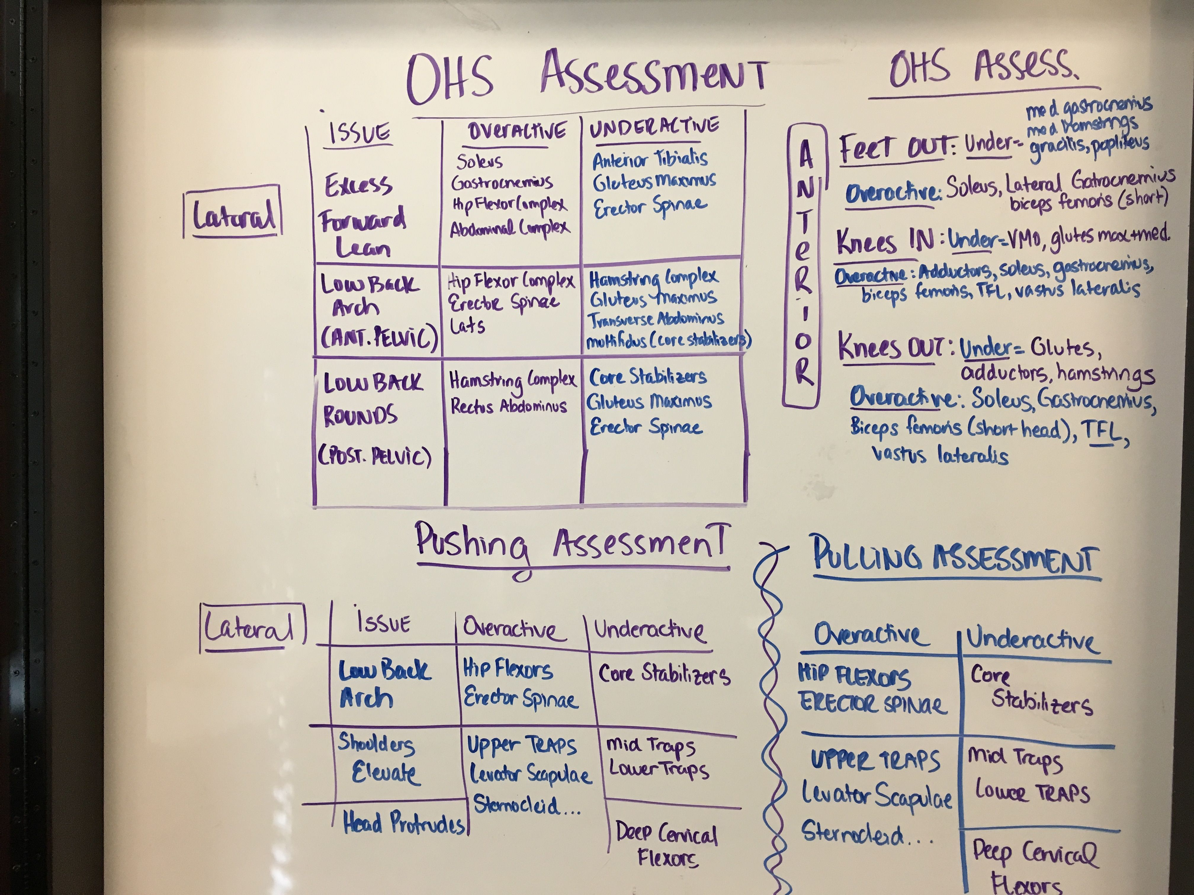 Ohs Assessment Nasm Nasm Pinterest Assessment And Lifestyle
