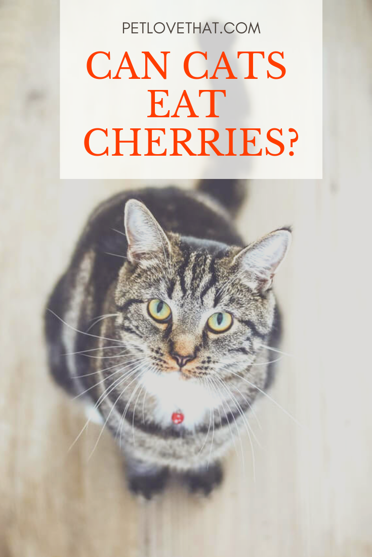 If You Re A Cat Owner You Ll Know That They Just Love To Eat They Seem To Be Happy Eating Most Food Items However Some Things We Hum Cats Eat Cat Questions