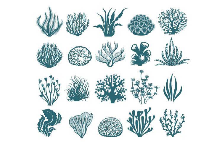 Seaweeds And Coral Silhouettes 1202234 Illustrations Design Bundles In 2021 Illustration Free Vector Art Free Vector Graphics