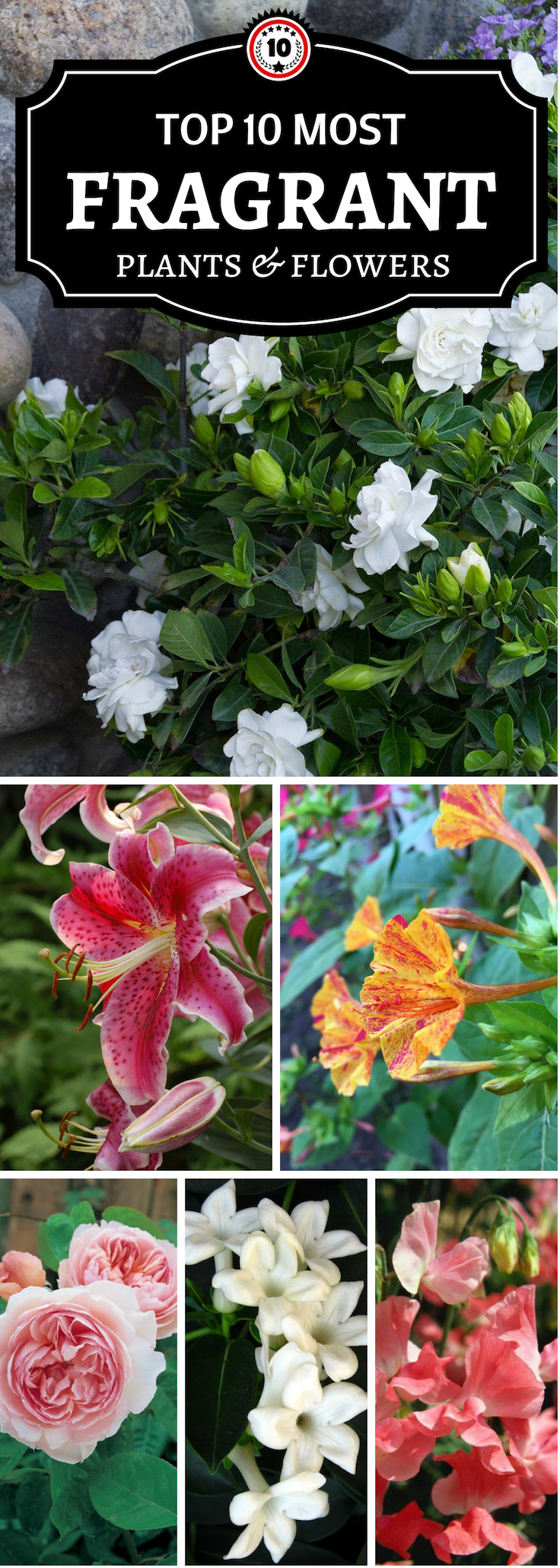 Top 10 Of The Most Fragrant Flowers In The World Landscaping