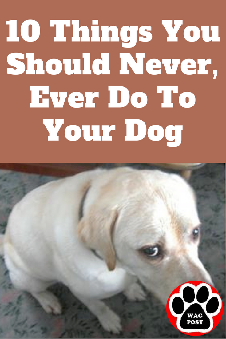 10 Things You Should Never Ever Do To Your Dog Dogs Dog Training Obedience Dog Care Tips
