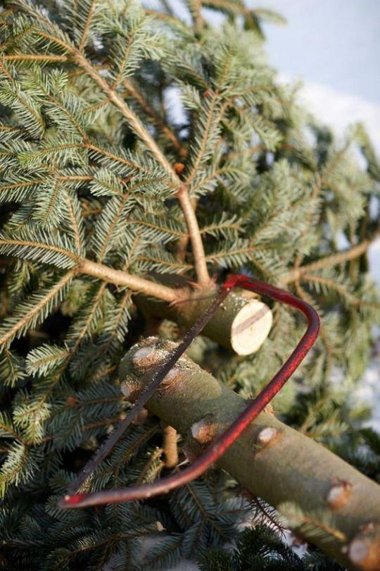 Lauren Dobish Photography Holiday Tree Christmas Wreaths Tree Farms