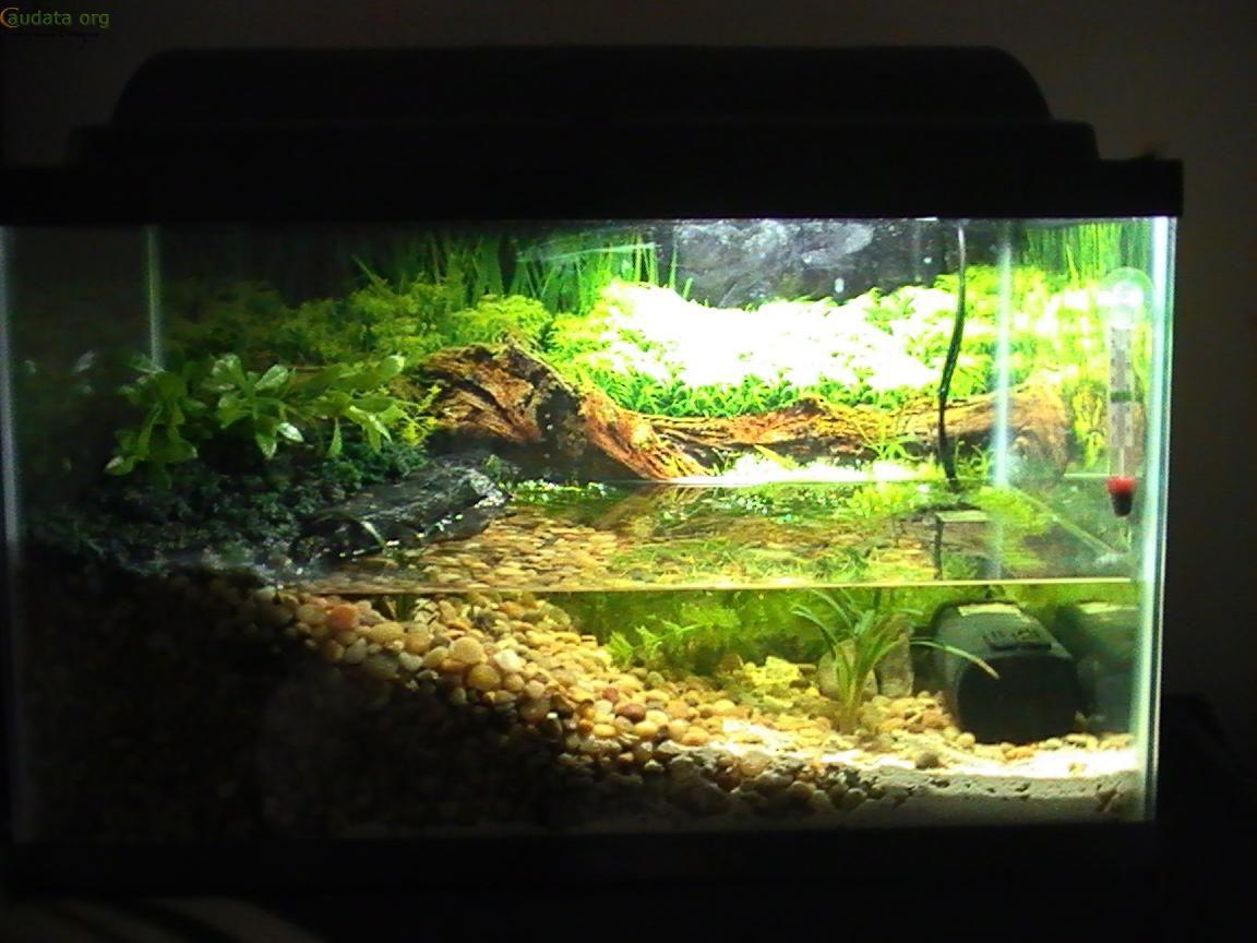 Axolotl tank pets pinterest axolotl tank axolotl for Aquarium einrichtungsideen