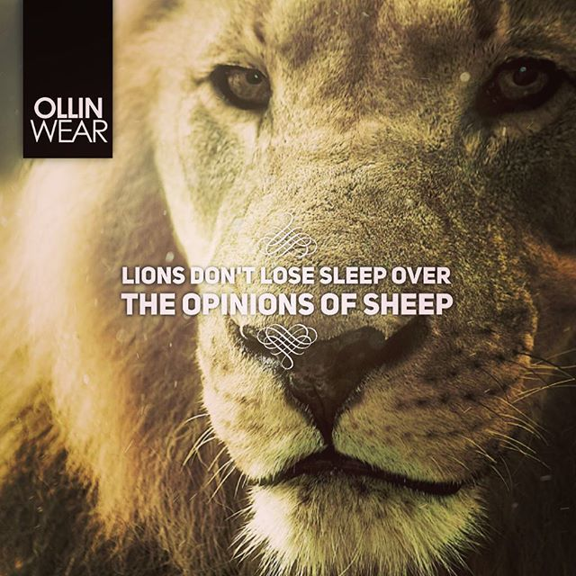 Inspiration Quote Lions Don T Lose Sleep Over The Opinions Of