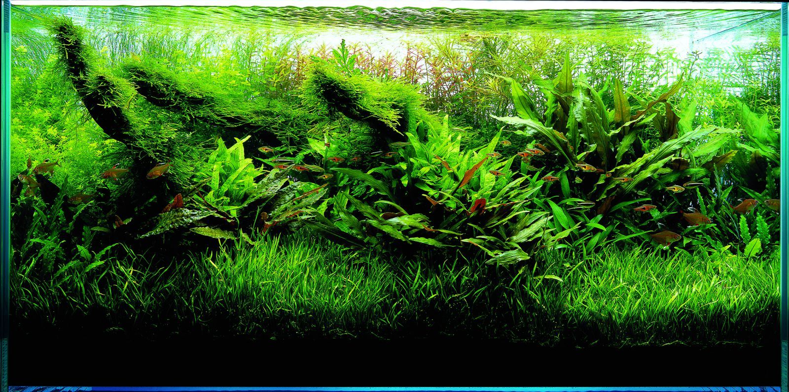 Perfect Trimming Technique For Plants Aquascaping Wiki In 2020 Aquascape Aquatic Plants Plants