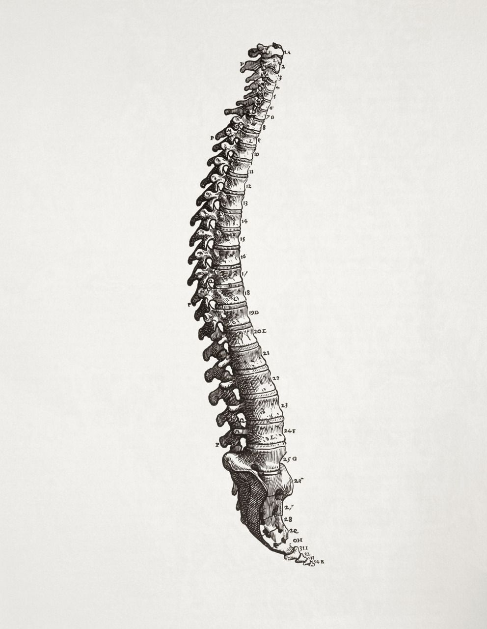 Get a backbone… | Columnas, Anatomía y Cuerpo