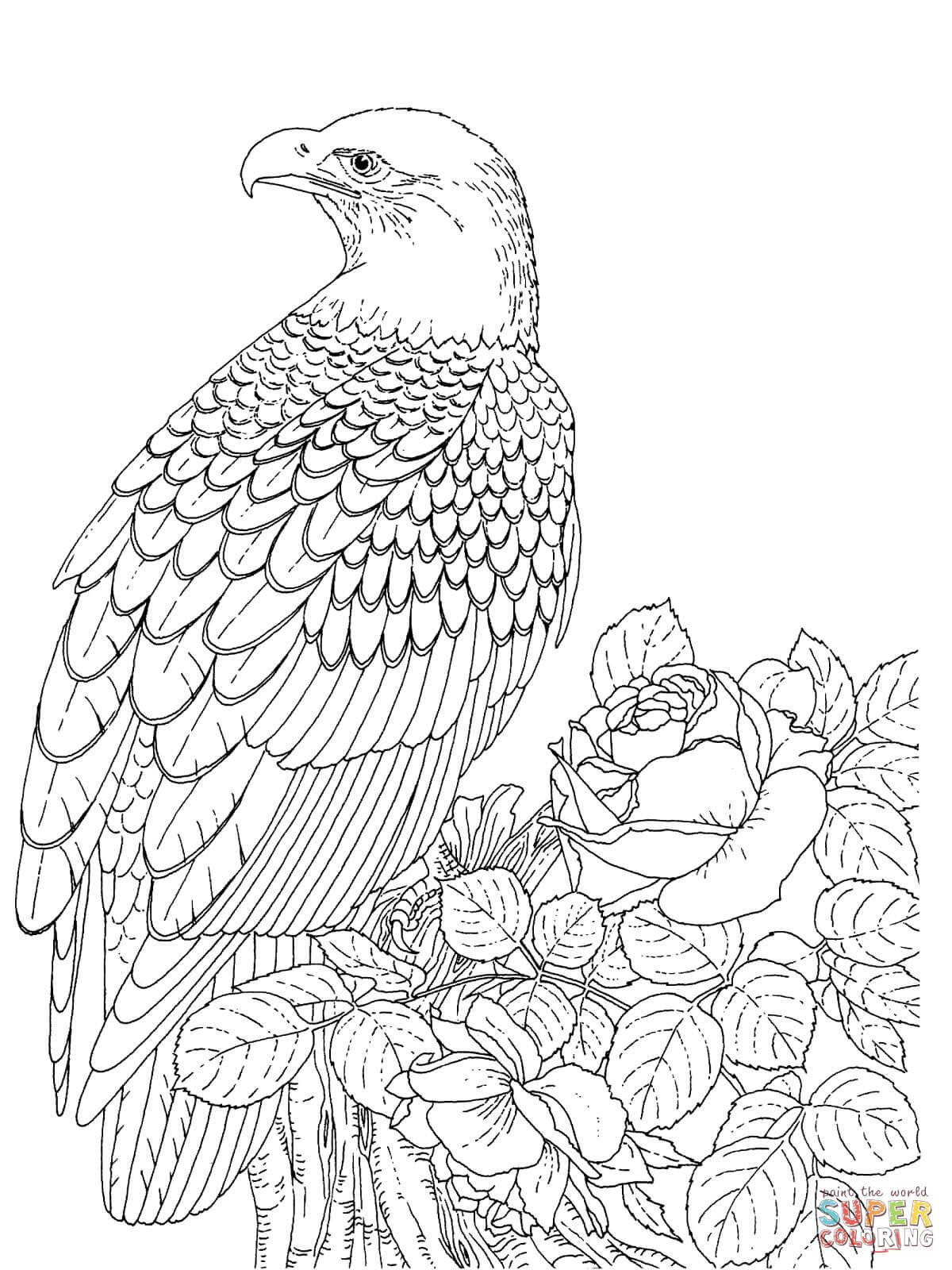Realistic Bald Eagle Animal Coloring Pages Bird Coloring Pages Coloring Pictures