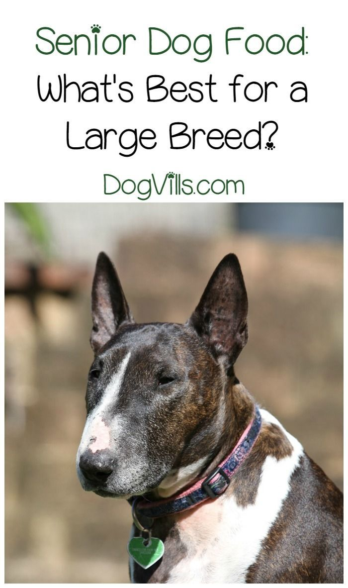 Best Senior Dog Food For Large Breeds (With images) | Best ...