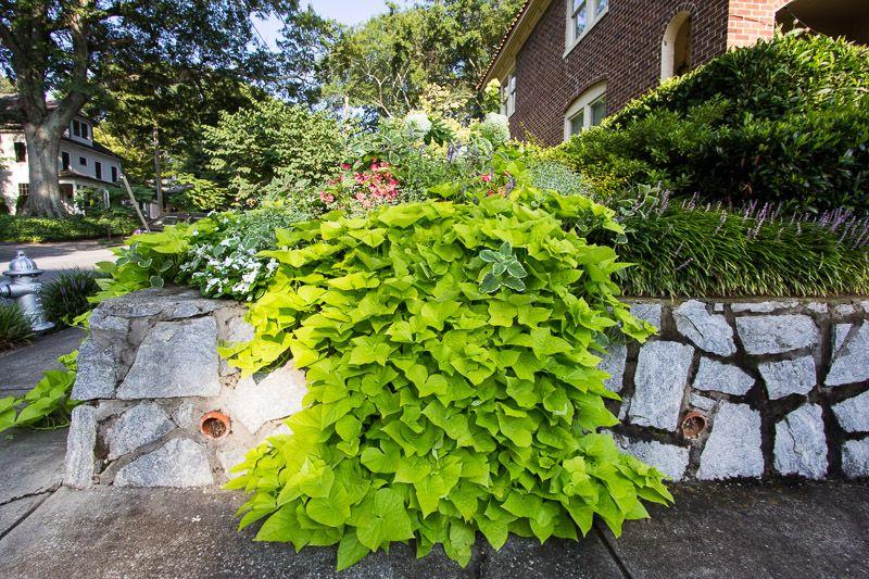 Lindsey On The Park Condo   Cultivators Landscape Architecture Atlanta