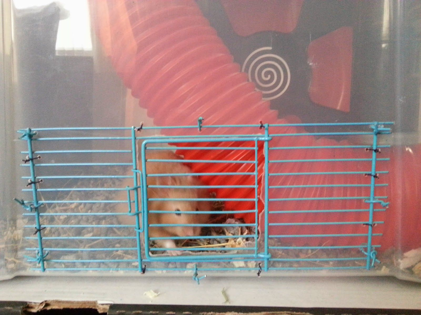 Adding a door to a hamster bin cage the rat pack hamster for Diy hamster bin cage