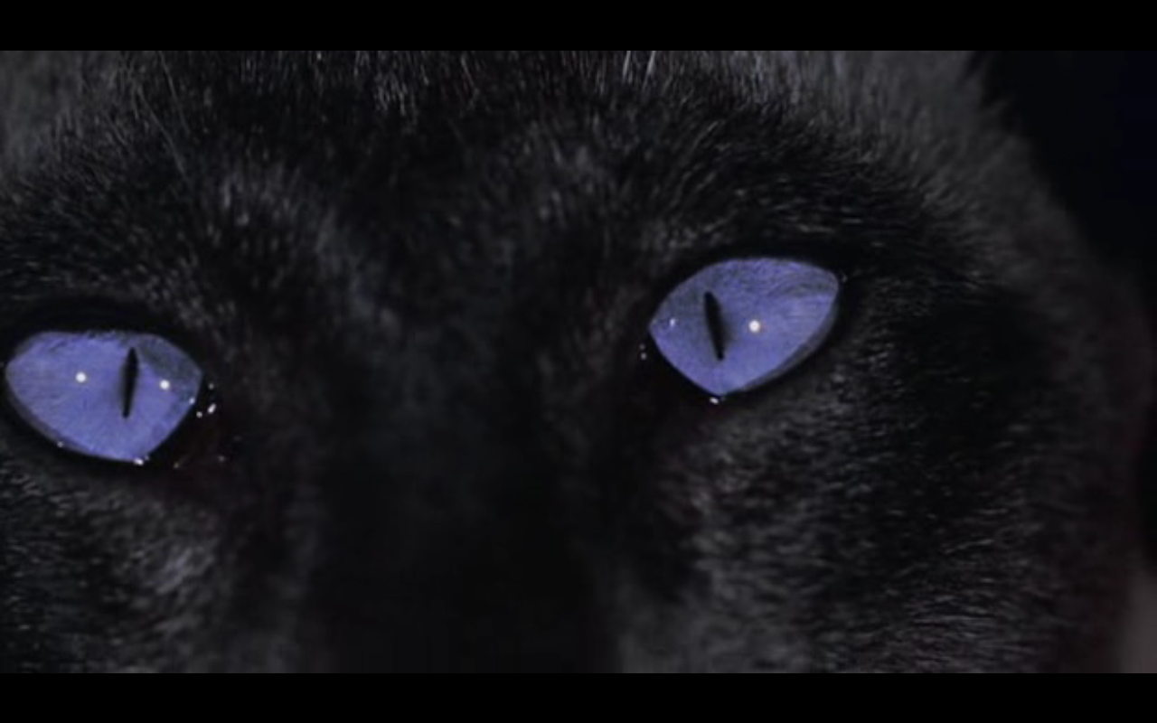 black cat... blue eyes | Cat\'s Eyes | Pinterest | Black cats, Blue ...