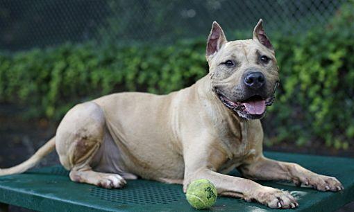 Pin On Dogs 4 Adoption